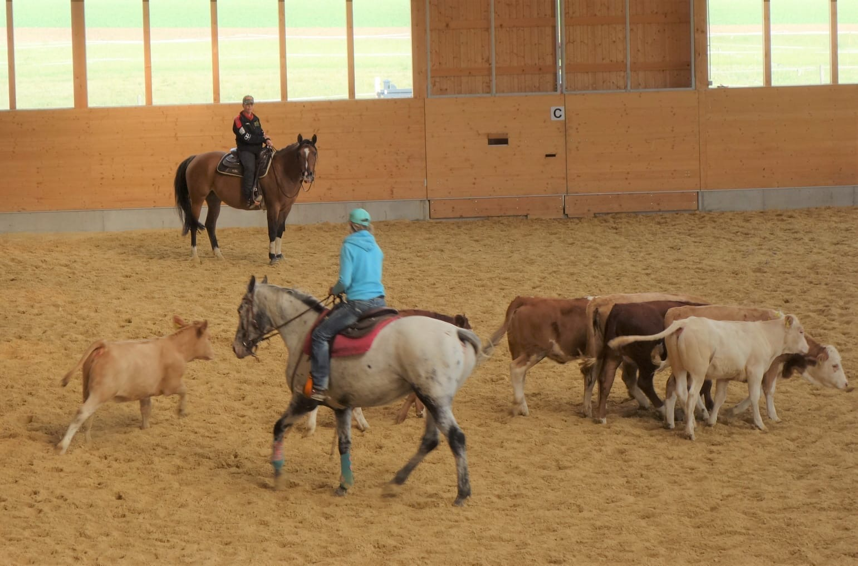 Ranchhorse Ranch Cutting mit und bei Ute Holm am 28. und 29.09.2020
